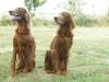 Asnath und Agape
